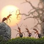Giải mã giấc mơ thấy kiến & nằm ngủ mơ thấy tổ kiến
