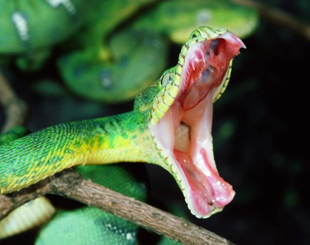 Giải mã giấc mơ thấy bị rắn cắn & nằm ngủ mơ thấy rắn cắn