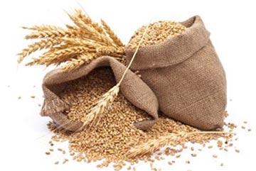 Giải mã giấc mơ thấy lúa mì & nằm ngủ mơ thấy mình ăn lúa mạch